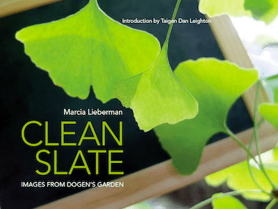 Clean Slate by Marcia Lieberman
